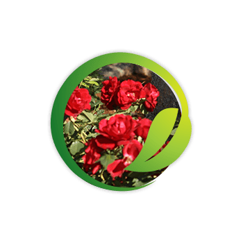 Lawn and Garden Icon On Home Page