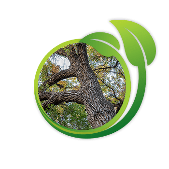 Tree Care Icon On Home Page